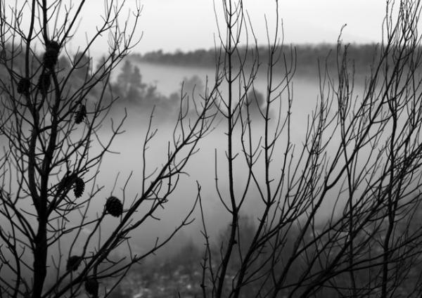 κλαδιά δέντρων, τοπίο με ομίχλη