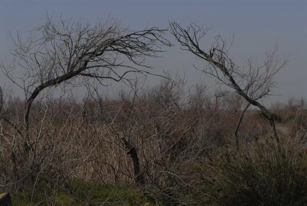 δέντρα σε αγρό