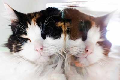 αντανάκλαση, γάτα