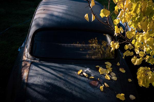 παλιό μαύρο αυτοκίνητο καλλυμένο με κίτρινα φθινοπωρινά φύλλα