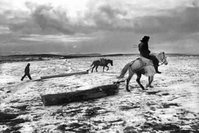 άλογα και αναβάτες σε χιόνι σέρνουν κορμούς δέντρων