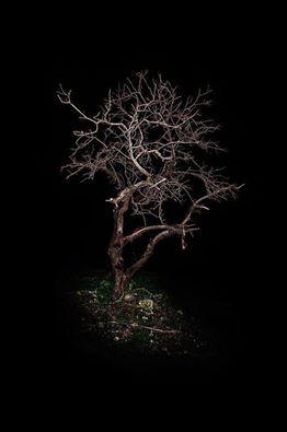 σκοτεινά φυτά