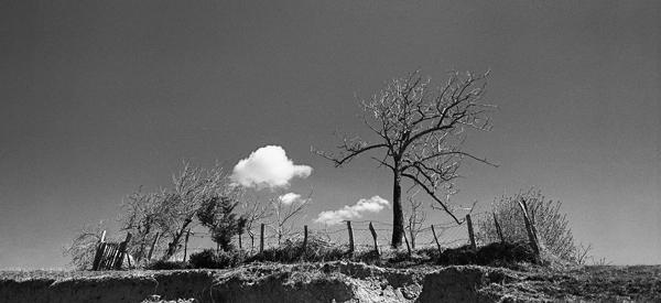 ασπρόμαυρη φωτογραφία / σύννεφο, δέντρο, στρούγκα