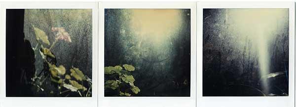 τρείς φωτογραφίες δίπλα δίπλα απο ένα λουλούδι και το φως του ήλιου