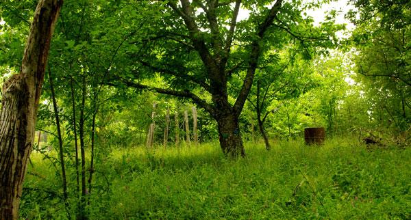 πράσινο λιβάδι