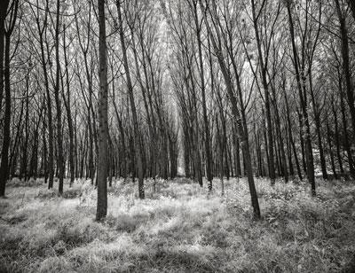 δάσος, ασπρόμαυρη φωτογραφία