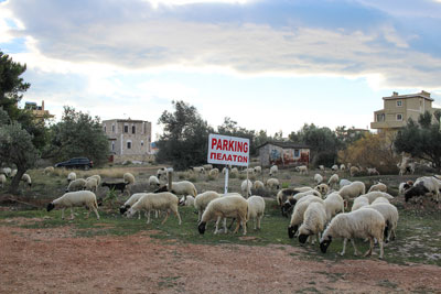 πρόβατα βόσκουν σε λιβάδι όπουυπάρχει ταμπέλα που γράφει parking πελατων