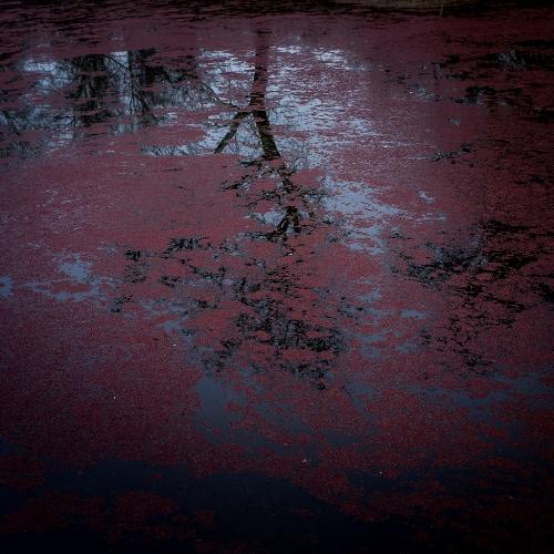 αντανάκλαση φύλλων σε νερό