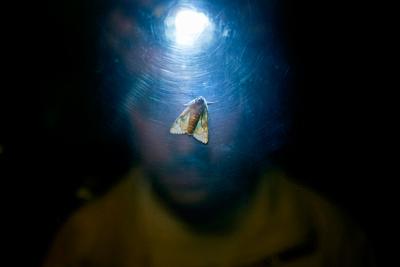 φως, πορταίτο άντρα, πεταλούδα