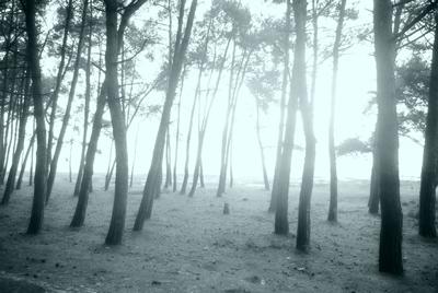 συστάδες δέντρων σε ομίχλη