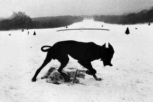 ένας μαύρος σκύλος