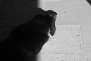 ασπρόμαυρη φωτογραφία, μάυρος σκύλος ξαπλωμένος στο πάτωμα
