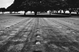 νεκροταφείο, στο βάφος ένα μεγάλο δέντρο