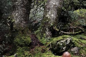 μανιτάρι στις ρίζες δέντρου