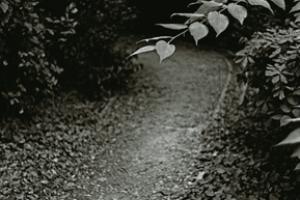 δρομάκι σε κάποιο δάσος