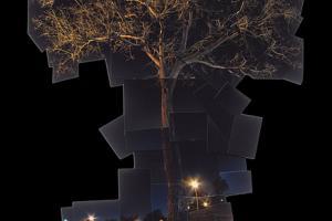 κολλάζ φωτογραφιών που σχηματίζουν ενα δέντρο