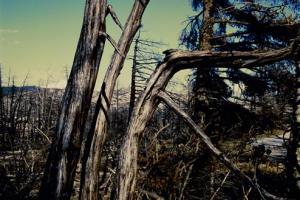δέντρα στην Πάρνηθα