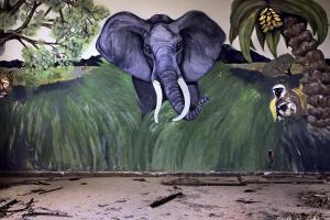 γκράφιτι ελέφαντα, έδαφος