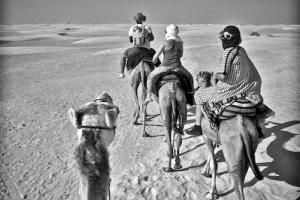 καμήλες, έρημος