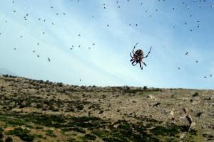 ιστός αρέχνης, αράχνη, τοπίο