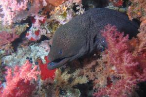 υδρόβιος κόσμος, ψάρι στο βυθό