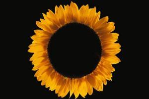 macro φωτογραφία, λουλούδι σε μάυρο φόντο