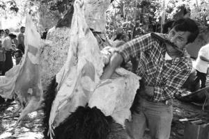 άντρας βγάζει το δέρμα από σκοτωμένο ταύρο