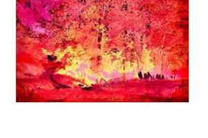 δάσος σε φωτιά