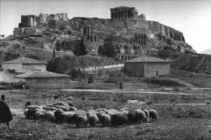 φωτογραφία: Fred Boissonnas / Πρόβατα κάτω από την Ακρόπολη, 1903
