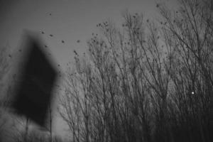 Φωτογραφία - Ελένη Θεοδωρίδου