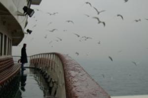 άνδρας στέκεται σε κατάστρωμα πλοίου, βροχή, γλάροι