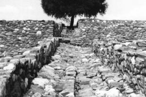 δέντρο σε αρχαιολογικό χώρο