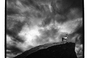 ασπρόμαυρη φωτογραφία, κένταυρος στην κορυφή βουνού