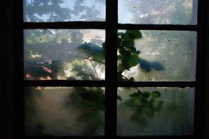 τα πράσινα φύλλα ενός δένδρου φαίνονται μέσα απο ένα θολό παράθυρο