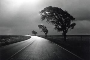 ασπρόμαυρη φωτογραφία, δρόμος, στροφή, τρία δέντρα