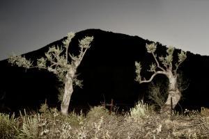 φωτογραφία με φλας, δύο δέντρα, βουνό