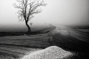 τοπίο, ασπρόμαυρη φωτογραφία, δέντρο σε βουνοπλαγιά