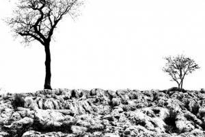Φωτογραφία εκδήλωσης,δέντρα