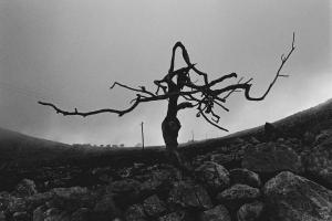 ασπρόμαυρη φωτογραφία, άνδρας, δέντρο, κορμός, κλαδιά