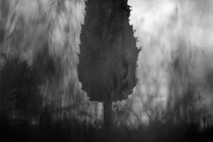 ασπρόμαυρη φωτογραφία, δέντρο