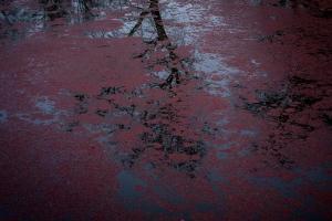 αντανάκλαση δέντρου στο νερό, πεσμένα φύλλα