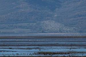 η λίμνη με πλήθος από υδρόβια πουλιά