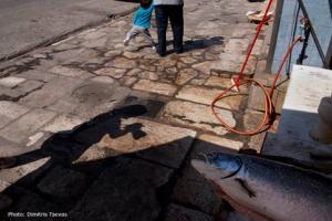 Σκιά φωτογράφου τη στιγμή που απαθανατίζει ένα μεγάλο ψάρι που κείτεται σε πεζοδρόμιο