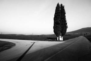 ασπρόμαυρη φωτογραφία / σταυροδρόμι και δέντρα