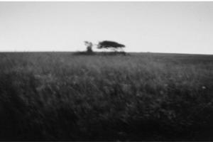 ασπρόμαυρη φωτογραφία στο κέντρο διακρίνεται στο βάθος ένα δέντρο σε ένα χωράφι