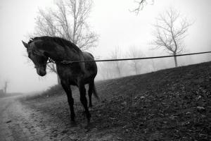 ασπρόμαυρη φωτογραφία, άλογο