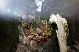 κορμος κομμένου δέντρου με λουλούδια, Ουροβόρος