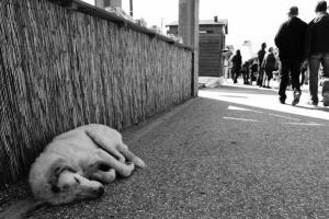 αδέσποτος σκύλος ξαπλωμένος στο δρόμο