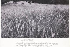 """στάχυα, ασπρόμαυρη φωτογραφία, ποίημα """"ο Στέργιος"""""""