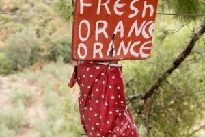 """πινακίδα σε δέντρο """"fresh orance orance"""""""